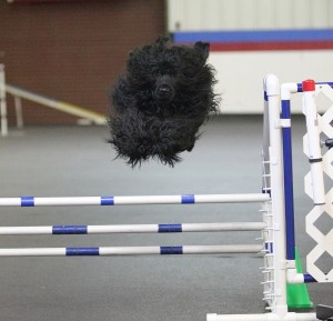 Billie's Open Jumpers Title