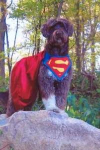 Super Dog Gertie