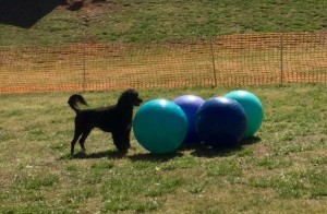 Chase's New Tiebball title