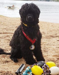 Hunter Portuguese Water Dog
